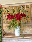 DAYLESFORD ORGANIC, GLOUCESTERSHIRE: RED FLOWERS OF AMARYLLIS IN WHITE METAL CONTAINER. BULBS, DISPLAY