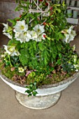 DAYLESFORD ORGANIC, GLOUCESTERSHIRE: CONTAINER WITH MOSS, FIR CONES, WHITE AMARYLLIS, HOLLY