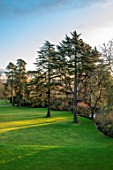 MORTON HALL GARDENS, WORCESTERSHIRE: ATLAS CEDAR, CEDRUS ATLANTICA GLAUCA, PARKLAND, LAWN, FROM ROOF OF HALL, WINTER, JANUARY