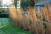 ST TIMOTHEE, BERKSHIRE - LAWN, HEDGE, HEDGING, ROW OF CALAMAGROSTIS X ACUTIFLORA KARL FOERSTER, OUTBUILDING, WINTER, FROSTY, ENGLISH, COUNTRY, GARDEN