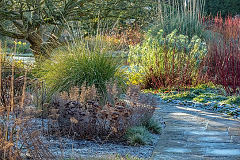ST_TIMOTHEE_BERKSHIRE__PATH_FROST_FROSTY_WINTER_JANUARY_ACHILLEA_PRETTY_BELINDA_SEDUM_CARL_PENNISETU