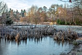 BRYANS GROUND, HEREFORDSHIRE: WINTER, LAKE, POOL, POND, BULLRUSHES, COUNTRY GARDEN, FROST, FROSTY