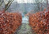 BRYANS GROUND, HEREFORDSHIRE - BEECH AVENUE, HEDGES, HEDGING, FROST, FROSTY, WINTER, FORMAL, PATH