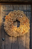 DESIGNER JACKY HOBBS - CHRISTMAS, WINTER, FRONT WOODEN, DOOR, WREATH, SEED HEADS OF ALLIUMS AND TEASELS, DIPSACUS FULLONUM, BROWN, FORAGED, NATURAL, DECORATIONS