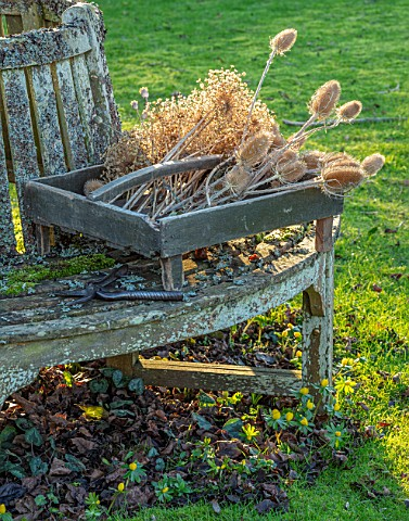 DESIGNER_JACKY_HOBBS__CHRISTMAS_WINTER_LAWN_TREE_SEAT_BENCH_BOX_WITH_SEED_HEADS_OF_ALLIUMS_AND_TEASE