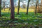 EYTHROPE, WADDESDON, BUCKINGHAMSHIRE - PARKLAND, TREES, SNOWDROPS, GALANTHUS, LAWN, SUNSET, EVENING, JANUARY, WINTER