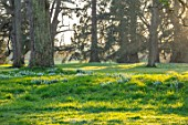 EYTHROPE, WADDESDON, BUCKINGHAMSHIRE: SNOWDROPS, PARKLAND, TREES, WINTER, JANUARY, GALANTHUS