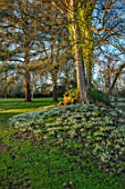 EYTHROPE, WADDESDON, BUCKINGHAMSHIRE: GROTTO, SNOWDROPS, PARKLAND, TREES, WINTER, JANUARY, GALANTHUS
