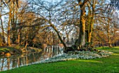 EYTHROPE, WADDESDON, BUCKINGHAMSHIRE: SNOWDROPS, PARKLAND, TREES, WINTER, JANUARY, GALANTHUS, LAKE, WATER, REFLECTIONS, REFLECTED
