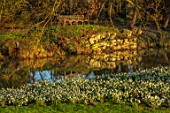 EYTHROPE, WADDESDON, BUCKINGHAMSHIRE: SNOWDROPS, PARKLAND, TREES, WINTER, JANUARY, GALANTHUS, LAKE, WATER, REFLECTIONS, REFLECTED, BENCH, SEAT, SEATING