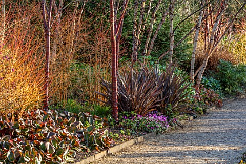 MOTTISFONT_ABBEY_HAMPSHIRE_THE_NATIONAL_TRUST_WINTER_GARDEN_JANUARY_BORDER_WITH_PHORMIUM_CYCLAMEN_BA