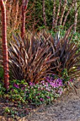 MOTTISFONT ABBEY, HAMPSHIRE. THE NATIONAL TRUST: WINTER GARDEN, JANUARY, BORDER WITH PHORMIUM, CYCLAMEN, BARK, PRUNUS SERRULA, BETULA, CORNUS MIDWINTER FIRE