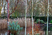 CHIPPENHAM PARK, CAMBRIDGESHIRE: REFLECTIONS ACROSS THE LAKE WITH BETULA, WINTER, JANUARY, SILVER BIRCHES, TREES, CORNUS, EUPHORBIA, REEDS