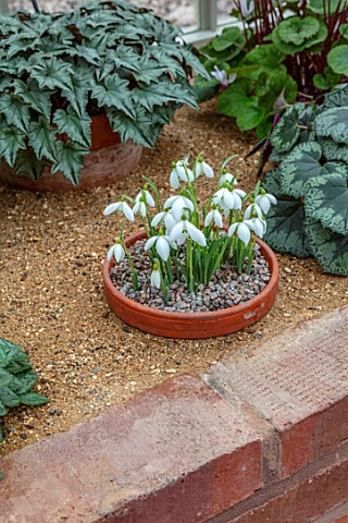 BIRMINGHAM_BOTANICAL_GARDENS_THE_ALPINE_HOUSE_IN_FEBRUARY_GLASSHOUSES_CYCLAMEN_SNOWDROPS_GALANTHUS