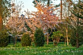 MORTON HALL GARDENS, WORCESTERSHIRE: VIBURNUM TINUS EVE PRICE AND AMELANCHIER X GRANDIFLORA PRINCESS DIANA, SPRING, APRIL, SUNRISE