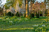 MORTON HALL GARDENS, WORCESTERSHIRE: SNAKES HEAD FRITILLARIES, DAFFODILS, NARCISSUS, AMELANCHIER X GRANDIFLORA PRINCESS DIANA, MEADOW, PARKLAND, DAWN, MARCH, SPRING, BULBS