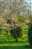 MORTON HALL GARDENS, WORCESTERSHIRE: VIBURNUM TINUS EVE PRICE, AMELANCHIER X GRANDIFLORA PRINCESS DIANA, MEADOW, PARKLAND, DAWN, MARCH, SPRING, BULBS