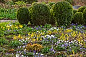 MORTON HALL GARDENS, WORCESTERSHIRE: YELLOW FLOWERS OF EPIMEDIUM X VERSICOLOR SULPHUREUM, WHITE AND PURPLE FLOWERS OF ANEMONE BLANDA, BOX TOPIARY, PERENNIALS, SHADE, SHADY