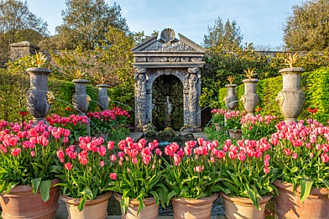 ARUNDEL_CASTLE_GARDENS_WEST_SUSSEX_COLLECTOR_EARLS_GARDEN_TERRACOTTA_CONTAINERS_WITH_TULIP_PINK_IMPR