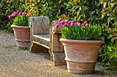 ARUNDEL CASTLE GARDENS, WEST SUSSEX: WOODEN OAK BENCH, SEAT, SEATS, BENCHES, TERRACOTTA CONTAINERS WITH TULIP PINK IMPRESSION, SPRING, APRIL