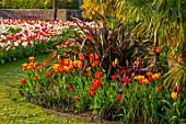 ARUNDEL CASTLE GARDENS, WEST SUSSEX: HOT BORDER WITH RED, ORANGE FLOWERING TULIPS, TRACHYCARPUS FORTUNEI, PHORMIUM, SPRING, APRIL, LAWN