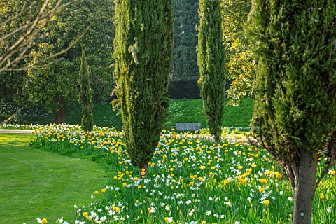 ARUNDEL_CASTLE_GARDENS_WEST_SUSSEX_NATURAL_PLANTING_MEADOW_WHITE_FLOWERS_OF_NARCISSUS_THALIA_YELLOW_