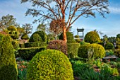 THE LASKETT GARDENS, HEREFORDSHIRE. DESIGNER ROY STRONG - THE SERPENTINE WALK, CLIPPED TOPIARY HOLLIES, YEW, BELVEDERE, BUILDINGS, SPRING, APRIL, ACER GRISEUM