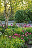 LITTLE ORCHARDS, SURREY, DESIGNER NIC HOWARD: FRONT GARDEN, DRIVE, APRIL, SPRING, BULBS, BIRCH, TULIPS, TULIPA AVEYRON, FOXTROT, ANGELIQUE, HAKONECHLOA MACRA, CALAMAGROSTIS OVERDAM