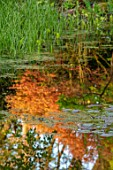 MORTON HALL GARDENS, WORCESTERSHIRE: LOWER POND, POOL, WATER, SPRING, APRIL, ACER, MAPLES, REFLECTIONS IN WATER, REFLECTED