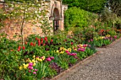MORTON HALL GARDENS, WORCESTERSHIRE: THE KITCHEN GARDEN, SPRING, APRIL, BORDER WITH TULIPS AMAZING GRACE, ANTOINETTE, CAFE NOIR, AVIGNON, WALLED GARDENS