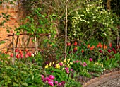 MORTON HALL GARDENS, WORCESTERSHIRE: THE KITCHEN GARDEN, SPRING, APRIL, BORDER WITH TULIPS AMAZING GRACE, ANTOINETTE, BALLERINA, NATIONAL VELVET, WALLED GARDENS