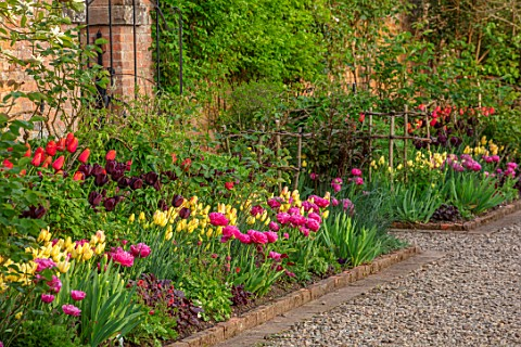 MORTON_HALL_GARDENS_WORCESTERSHIRE_THE_KITCHEN_GARDEN_SPRING_APRIL_BORDER_WITH_TULIPS_AMAZING_GRACE_