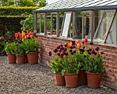 MORTON HALL GARDENS, WORCESTERSHIRE: THE KITCHEN GARDEN, SPRING, APRIL, TERRACOTTA CONTAINERS PLANTED WITH TULIPS - TULIPA FIERY CLUB, CAFE NOIR, RHAPSODY OF SMILES, BLACK HERO