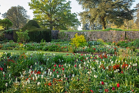 FORDE_ABBEY_SOMERSET_PARK_GARDEN_BORDERS_CARDOON_TULIPS_TULIPA_KINGSBLOOD_QUEEN_OF_THE_NIGHT_TRIUMPH