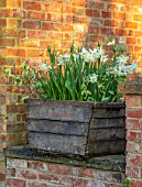 DESIGNER ANGELA COLLINS: WOODEN VINE BOX, CONTAINER WITH WHITE FLOWERS - LEOCOJUM GRAVETYE GIANT, TULIP EVERGREEN, NARCISSUS TRESAMBLE, CORNUS ALBA VARIEGATA
