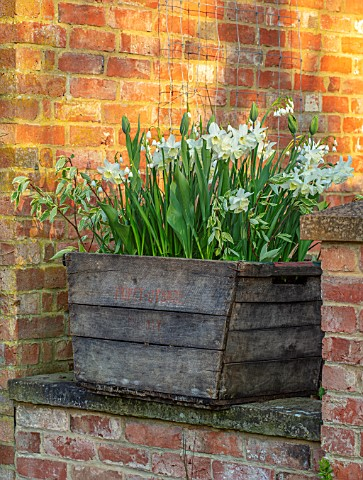 DESIGNER_ANGELA_COLLINS_WOODEN_VINE_BOX_CONTAINER_WITH_WHITE_FLOWERS__LEOCOJUM_GRAVETYE_GIANT_TULIP_