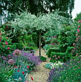 VIEW ALONG GRAVEL PATH TO PYRUS SALICIFOLIA PENDULA  WITH DIANTHUSROSE DU MAI ALLIUM CHRISTOPHII.THE ANCHORAGE KENT