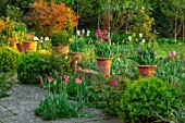 DESIGNER ANGELA COLLINS: WALL, PATIO, TERRACE, CONTAINERS WITH TULIPS - TULIPA EVERGREEN, TULIPA SLAWA, TULIPA VIRICHIC, TULIPA BLACK HERO, BULBS, SPRING, APRIL