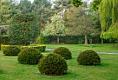 HALL O TH WOOD, CHESHIRE: HOUSE, LAWN, SPRING, APRIL, CLIPPED, TOPIARY, SHAPES, GREEN, YEW, TAXUS, LAWN