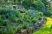HALL O TH WOOD, CHESHIRE: LAWN, SPRING, APRIL, RAISED BED, BORDER, BLUEBELLS, WOODEN BENCHES, SEAT, BLUE FLOWERS, SHADE, SHADY