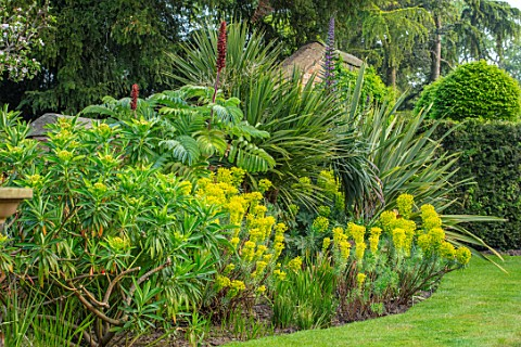 HALL_O_TH_WOOD_CHESHIRE_BORDER_SPRING_APRIL_PHORMIUM_TENAX_ECHIUM_CORDYLINE_MELIANTHUS_MAJOR_EUPHORB