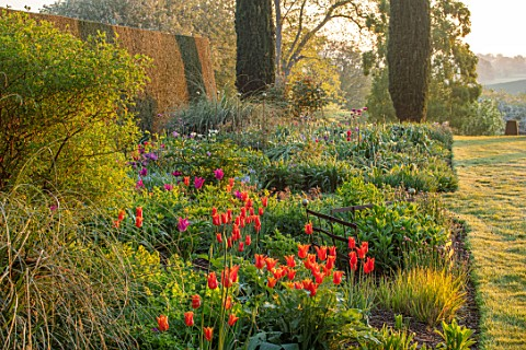 PETTIFERS_OXFORDSHIRE_SPRING_APRIL_EARLY_MORNING_DAWN_ENGLISH_COUNTRY_GARDEN_BORDER_WITH_ORANGE_FLOW