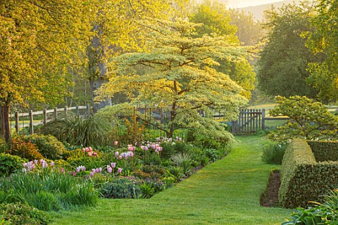 PETTIFERS_OXFORDSHIRE_SPRING_APRIL_EARLY_MORNING_DAWN_ENGLISH_COUNTRY_GARDEN_BORDER_TUKIPS_TULIPA_SA