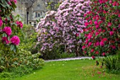 GRAVETYE MANOR, SUSSEX: COUNTRY GARDEN, APRIL, SPRING, RHODODENDRONS IN THE WOODLAND GARDEN WITH MANOR BEHIND, PINK, FLOWERS, FLOWERING, BLOOMING