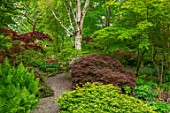 THE PICTON GARDEN AND OLD COURT NURSERIES, WORCESTERSHIRE: PATH, SHADE, SHADY, WOODLAND, ACERS, ACER LITTLE PRINCESS, MATTEUCIA STRUTHIOPTERIS, GREEN, MAPLES