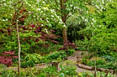 THE PICTON GARDEN AND OLD COURT NURSERIES, WORCESTERSHIRE: PATH, SHADE, SHADY, WOODLAND, ACERS, GREEN, MAPLES, DAVIDIA INVOLUCRATA, HANDKERCHIEF TREE, DOVE TREE, GHOST TREE