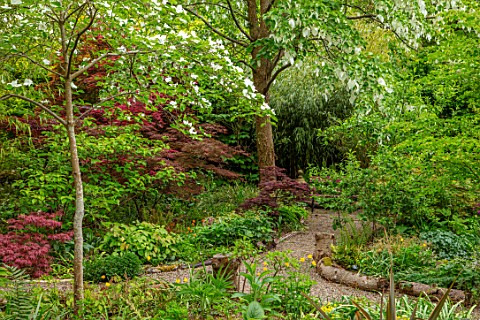 THE_PICTON_GARDEN_AND_OLD_COURT_NURSERIES_WORCESTERSHIRE_PATH_SHADE_SHADY_WOODLAND_ACERS_GREEN_MAPLE
