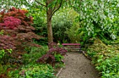 THE PICTON GARDEN AND OLD COURT NURSERIES, WORCESTERSHIRE: PATH, SHADE, SHADY, WOODLAND, ACERS, GREEN, MAPLES, TREES, SEAT, BENCH