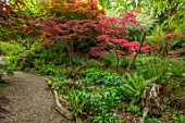 THE PICTON GARDEN AND OLD COURT NURSERIES, WORCESTERSHIRE: PATH, SHADE, SHADY, WOODLAND, ACERS, GREEN, MAPLES, TREES, FERNS, STUMP, STUMPERY