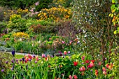 GRAVETYE MANOR, SUSSEX: COUNTRY GARDEN, APRIL, SPRING, BORDER WITH TULIPS, EVENING LIGHT, SLOPE, HILLSIDE, AZALEAS, EUPHORBIAS
